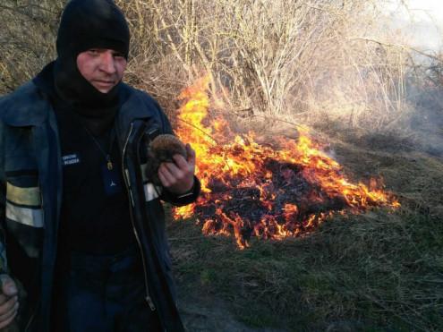 За минулу добу у Волинській області ліквідували 10 пожеж сухої трави