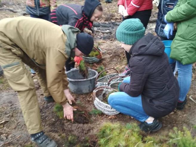 Як на Старовижівщині школярі ліс садили