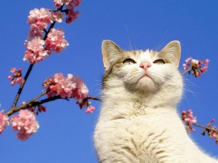 Смешные, картинки уже весна