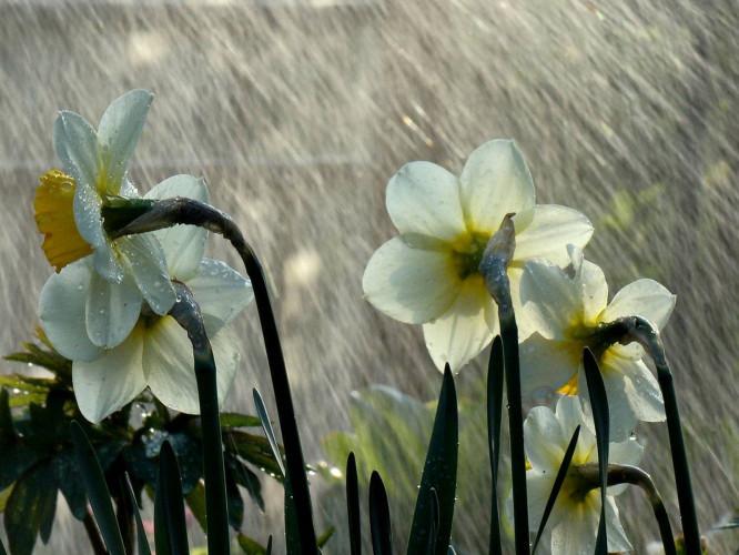 Волинянам слід чекати на чергову порцію рясних дощів