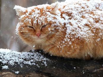 У Старій Вижівці прогнозують мокрий сніг