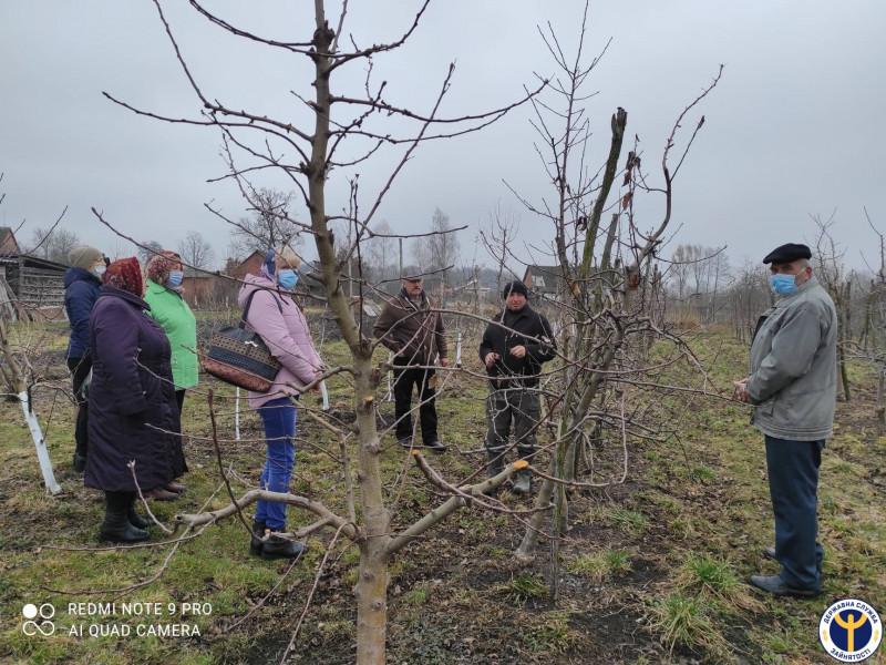 Старовижівчан навчали, як вирощувати плодові дерева
