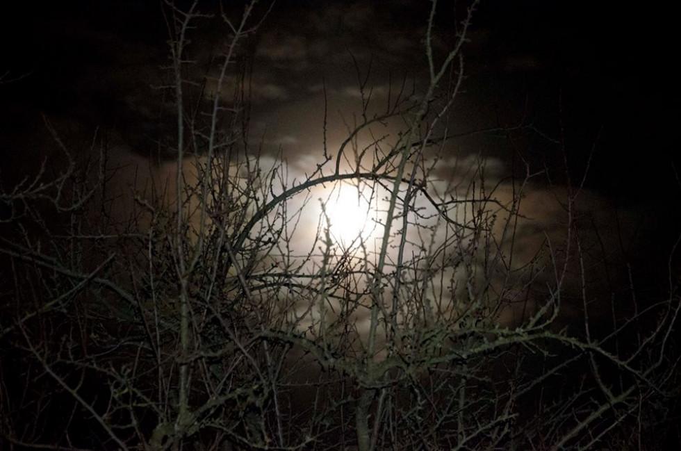 Небесне явище крізь віття дерев