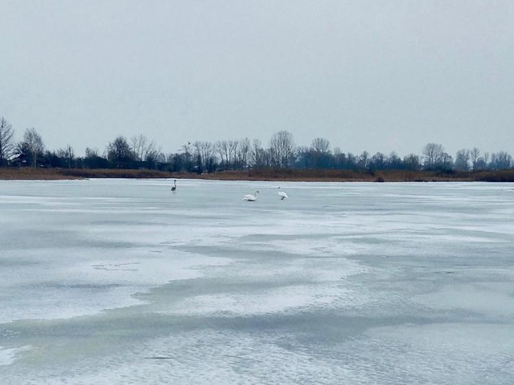 Водойма повністю замерзла