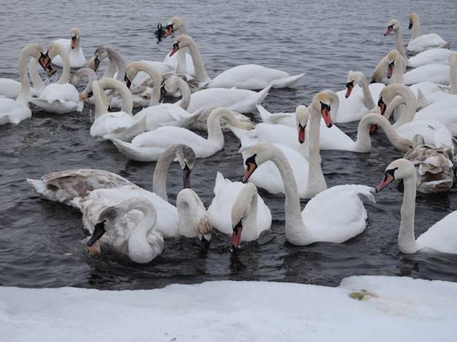 Птахи, які пережили зиму