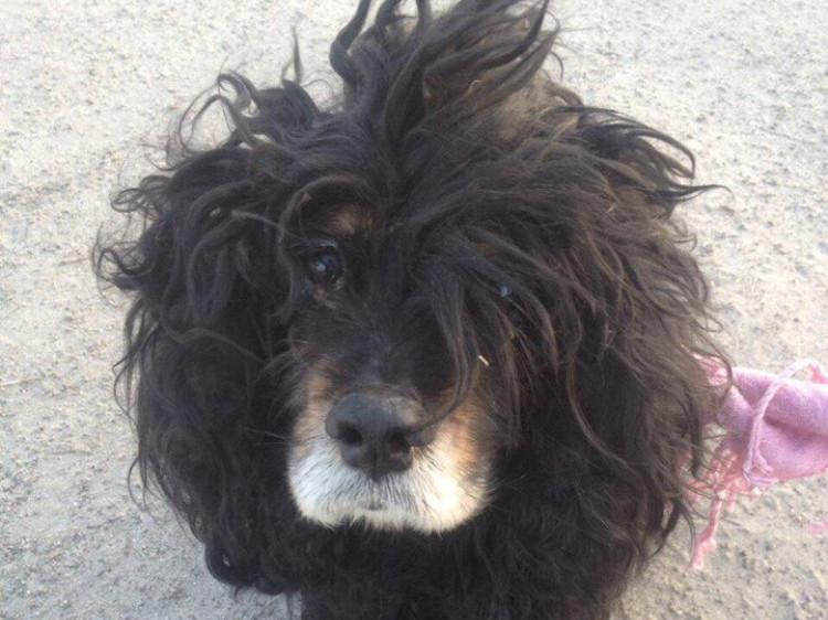 Знайдена собачка сумує за домом