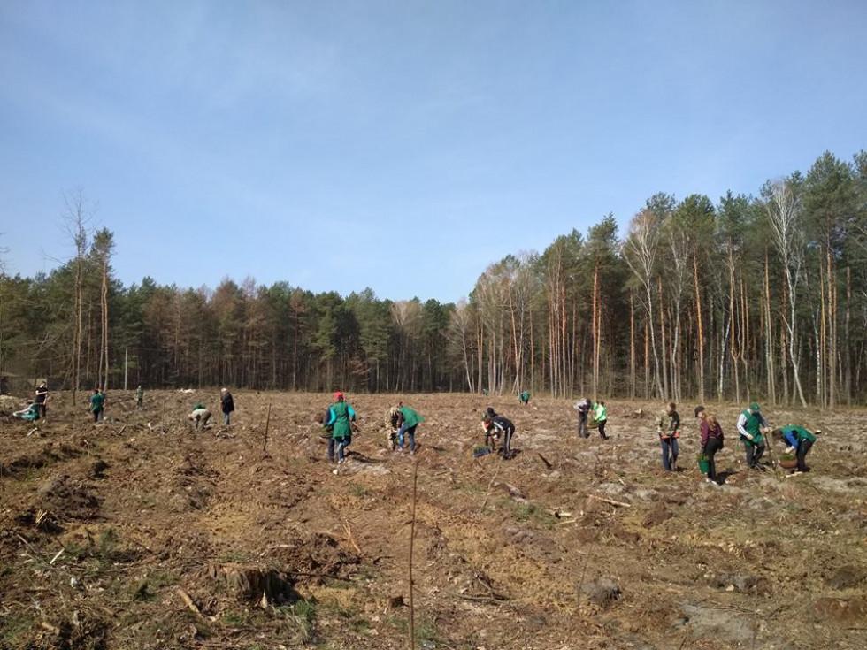 Посадка лісу