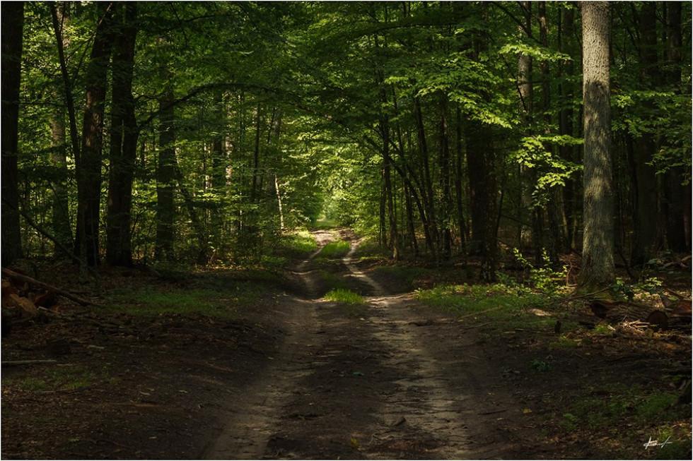 Ліси старовижівщини
