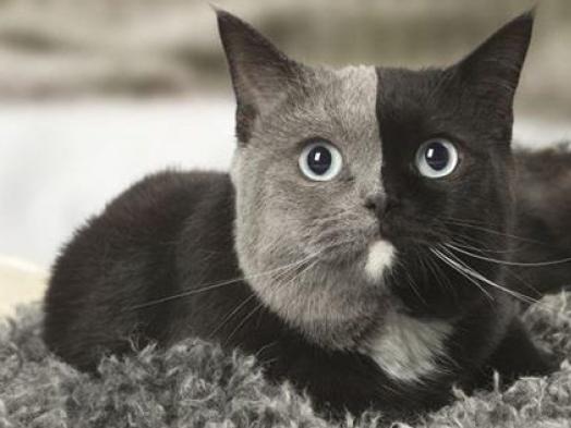 Всесвітній день котів