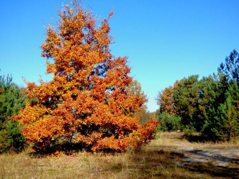 Показали світлини осінньої краси у Смідинській громаді