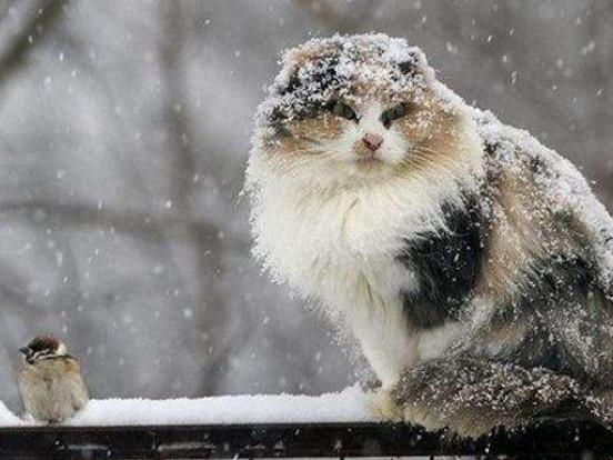 У Старій Вижівці на 13 лютого прогнозують дощ зі снігом